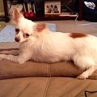 Adopt A Pet :: Toby - Mesa, AZ