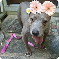 Adopt A Pet :: Mona - Gainesville, FL