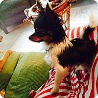 Adopt A Pet :: GinGin - Houston, TX