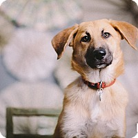Adopt A Pet :: Chutney - Portland, OR