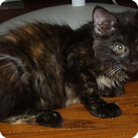 Adopt A Pet :: FREDA - Acme, PA