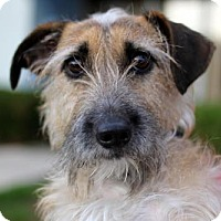 Adopt A Pet :: Hoagie - San Diego, CA