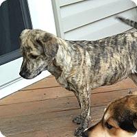 Adopt A Pet :: Otis - Aurora, IL