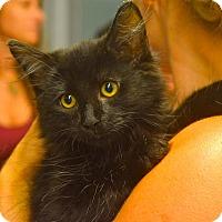 Adopt A Pet :: Neco - Sparta, NJ