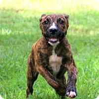 Adopt A Pet :: Morgan - Glastonbury, CT