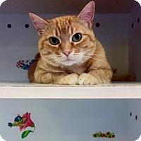 Adopt A Pet :: Mia - Wilton, NY