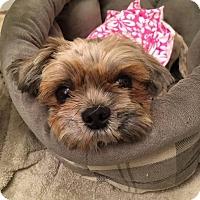 Adopt A Pet :: Dory - Hanover, PA