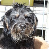 Adopt A Pet :: Oscar - Harmony, Glocester, RI