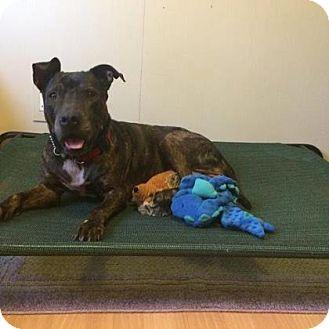Labrador Retriever Mix Dog for adoption in Loxahatchee, Florida - Trina E7B