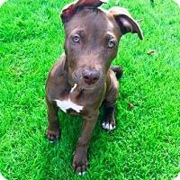 Adopt A Pet :: Fiona - Gilbert, AZ