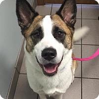 Adopt A Pet :: Kahlua - Omaha, NE
