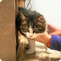 Adopt A Pet :: Hairy Potter $25 Fee in Dec - Ottawa, KS