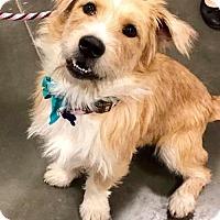 Adopt A Pet :: Duffy - St Louis, MO
