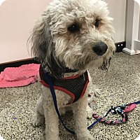 Adopt A Pet :: Tobias - Thousand Oaks, CA