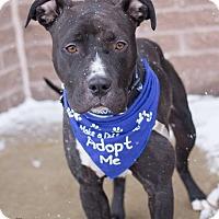 Adopt A Pet :: Marriott - Grand Rapids, MI