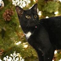 Adopt A Pet :: Smudge - Aiken, SC