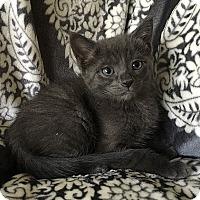 Adopt A Pet :: Piglet - Tampa, FL
