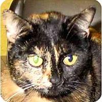 Adopt A Pet :: Sassy - Plainville, MA