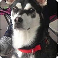 Adopt A Pet :: Batgirl - Lake Forest, CA