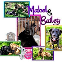 Adopt A Pet :: Mabel - Colleyville, TX
