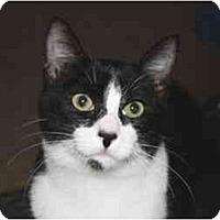 Adopt A Pet :: Margo - Davis, CA