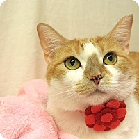 Adopt A Pet :: Piper - Foothill Ranch, CA