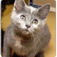 Adopt A Pet :: Cinderella - Colmar, PA