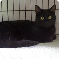 Adopt A Pet :: Abby - East Brunswick, NJ