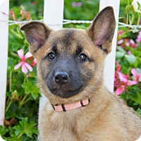 Adopt A Pet :: Carys von Calw - Thousand Oaks, CA