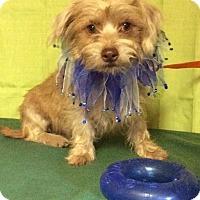 Adopt A Pet :: Tippy - Shelter Island, NY
