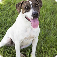 Adopt A Pet :: Zander - Williston, FL