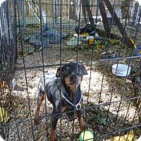 Adopt A Pet :: Bubba - Wyanet, IL
