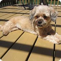 Adopt A Pet :: Chrissy 3341 - Toronto, ON