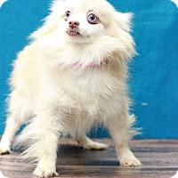 Adopt A Pet :: Tahoe - Waldorf, MD