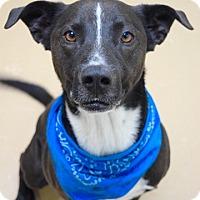 Adopt A Pet :: Sammy - Dublin, CA