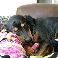 Adopt A Pet :: Otto - Prospect,, KY