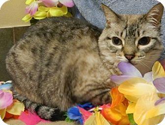 Domestic Shorthair Cat for adoption in Columbus, Nebraska - Caroline