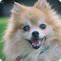 Adopt A Pet :: Kobi - conroe, TX
