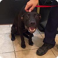 Adopt A Pet :: Indy - Cerritos, CA
