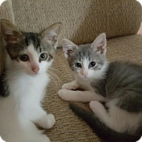 Adopt A Pet :: Wren - Warren, OH