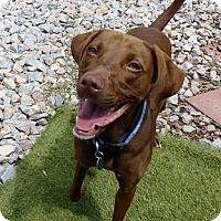Adopt A Pet :: Ellen - Buckeystown, MD