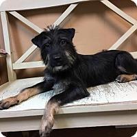Adopt A Pet :: Owen - Wilmington, DE