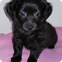 Adopt A Pet :: Mercedes - Stockton, CA