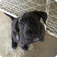 Adopt A Pet :: Molly - Maysville, KY