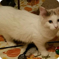 Adopt A Pet :: MacKenzie - Charlotte, NC