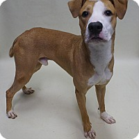 Chatham County Ga Dog Rescue
