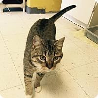Adopt A Pet :: Sammy - Pittsburg, KS