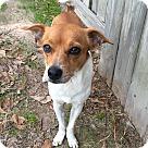 Adopt A Pet :: Milton