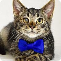 Adopt A Pet :: Ernest - Dublin, CA