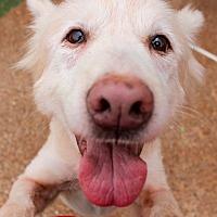 Adopt A Pet :: Blondie - Memphis, TN